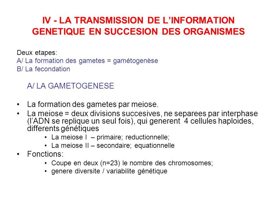 U.M.F IAŞI IV - LA TRANSMISSION DE L'INFORMATION GENETIQUE EN SUCCESION DES ORGANISMES. Deux etapes: