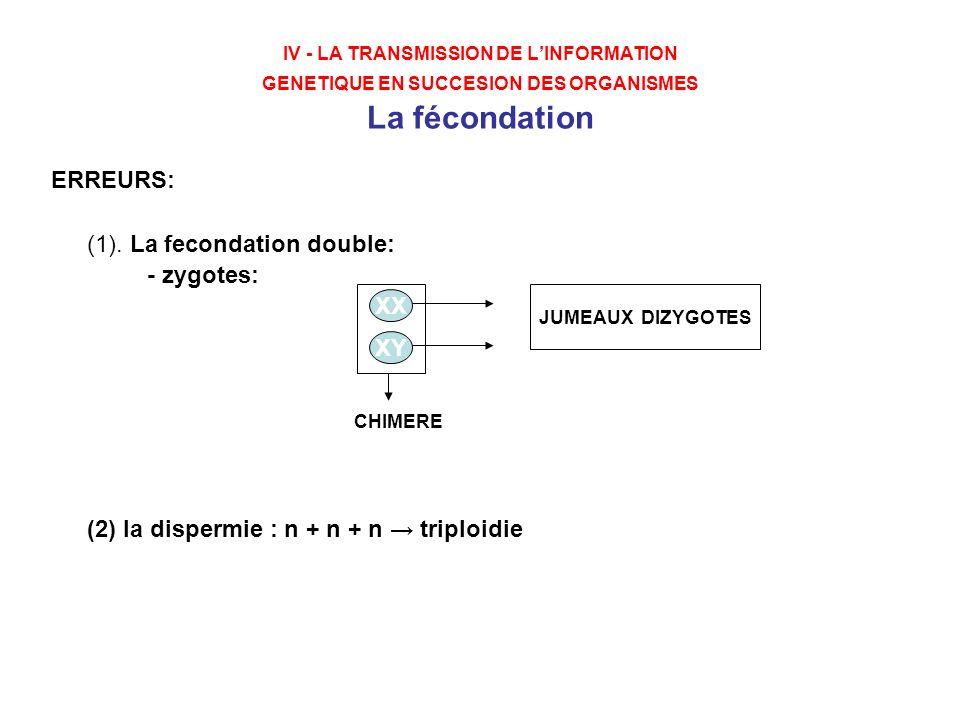 (1). La fecondation double: - zygotes: