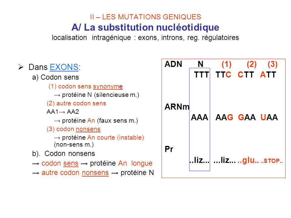 Dans EXONS: ADN N (1) (2) (3) TTT TTC CTT ATT ARNm AAA AAG GAA UAA Pr