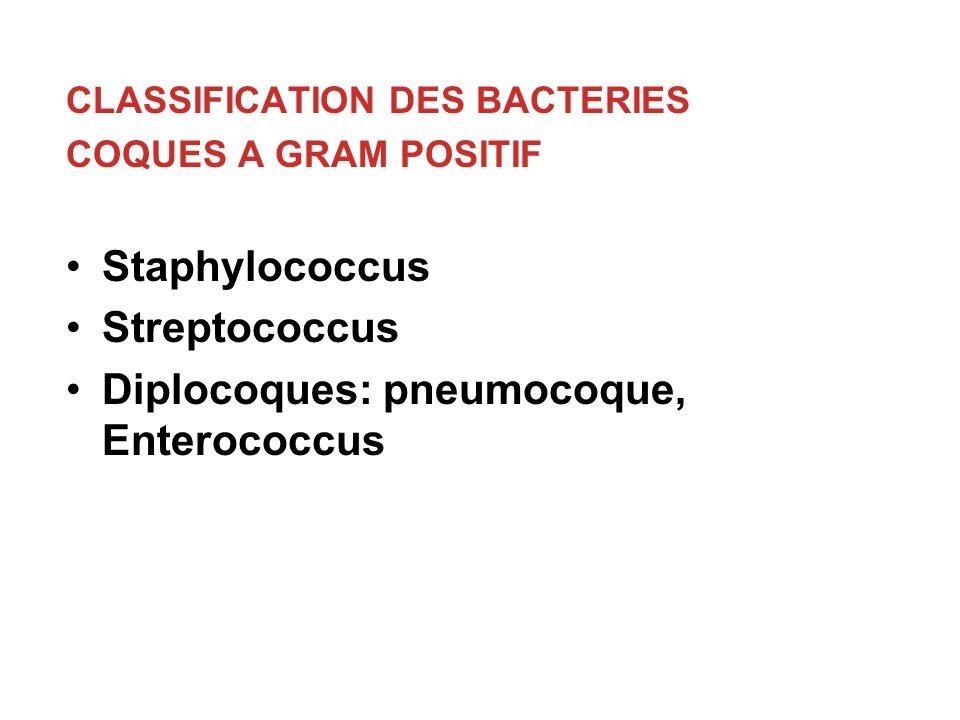 Diplocoques: pneumocoque, Enterococcus