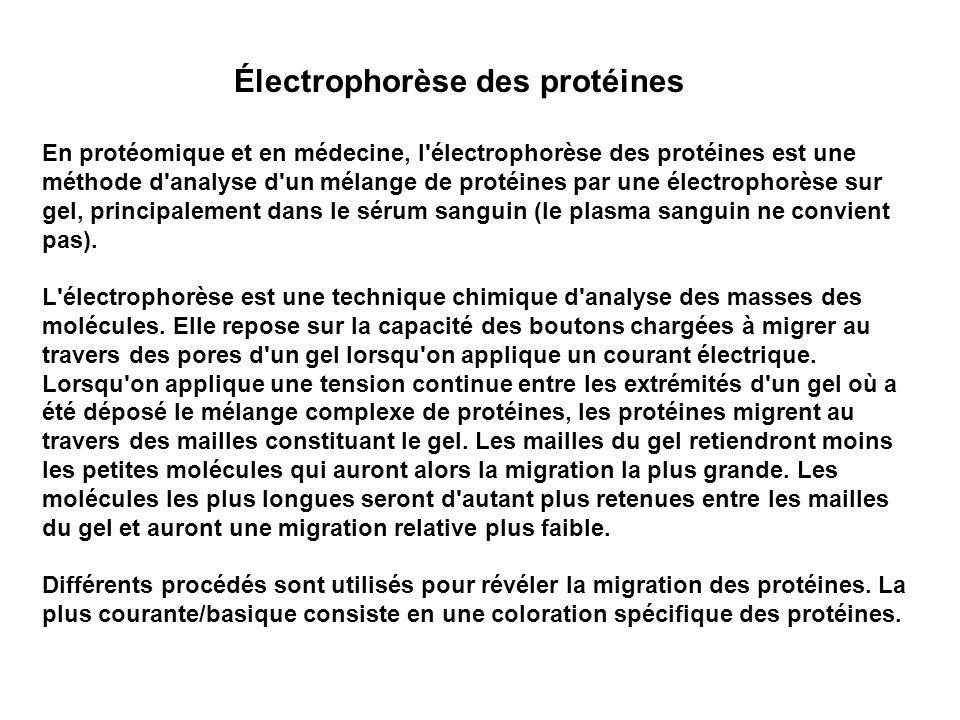 Électrophorèse des protéines
