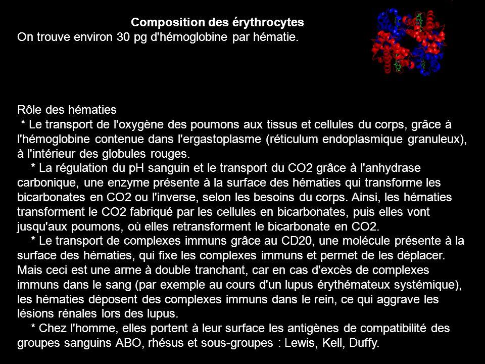 Composition des érythrocytes