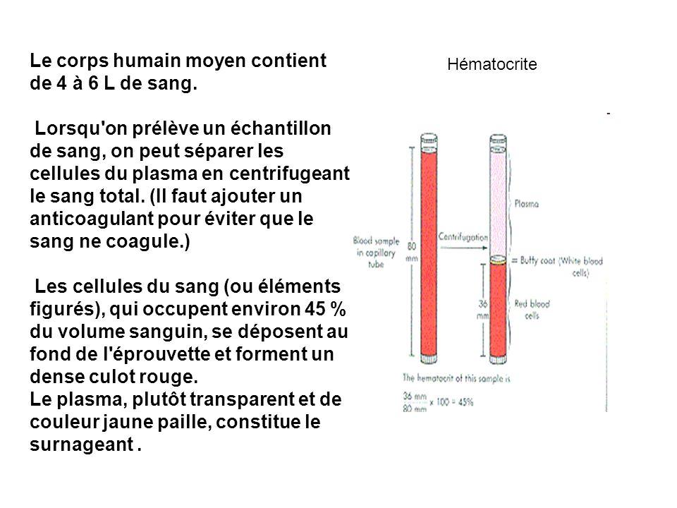 Le corps humain moyen contient de 4 à 6 L de sang.