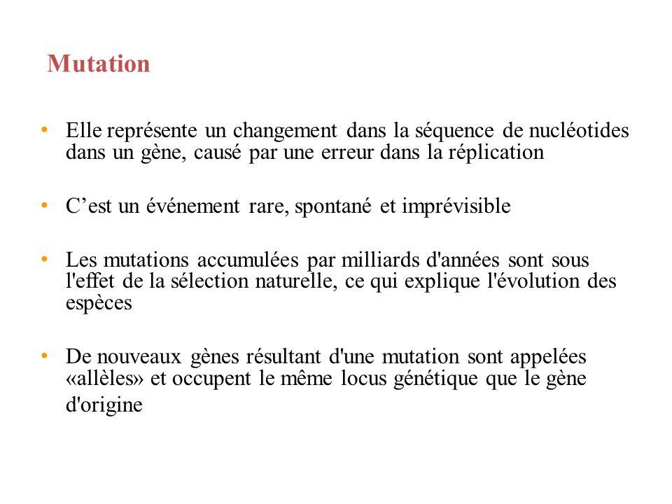 Mutation Elle représente un changement dans la séquence de nucléotides dans un gène, causé par une erreur dans la réplication.