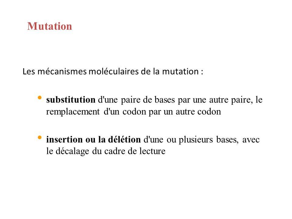 Mutation Les mécanismes moléculaires de la mutation :