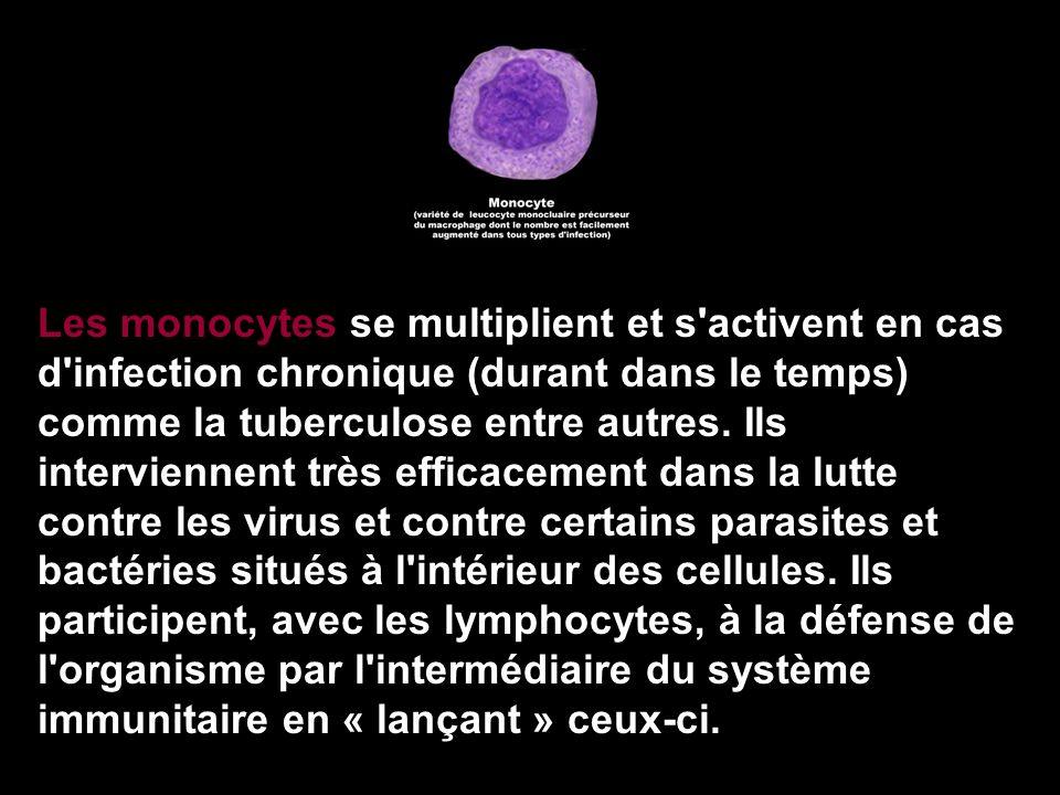 Les monocytes se multiplient et s activent en cas d infection chronique (durant dans le temps) comme la tuberculose entre autres.