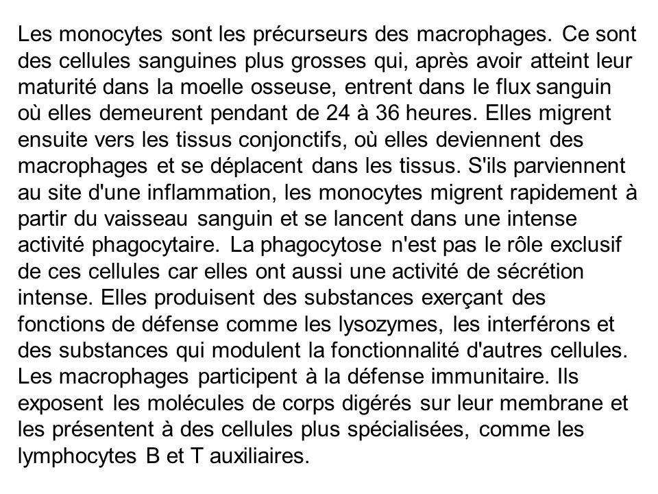 Les monocytes sont les précurseurs des macrophages