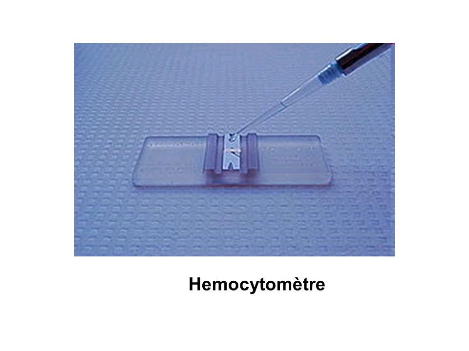 Hemocytomètre