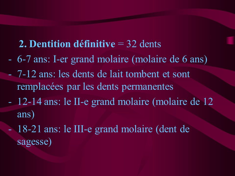 2. Dentition définitive = 32 dents