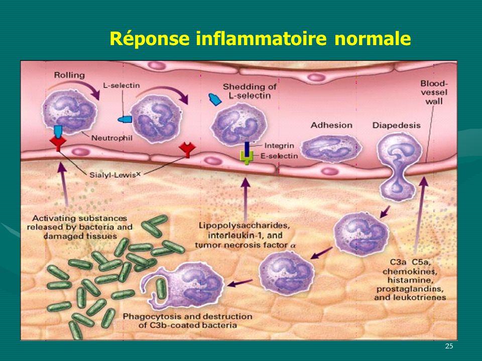Réponse inflammatoire normale