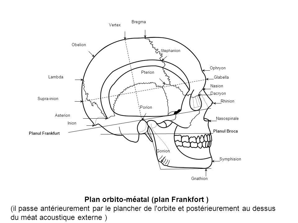 Plan orbito-méatal (plan Frankfort )