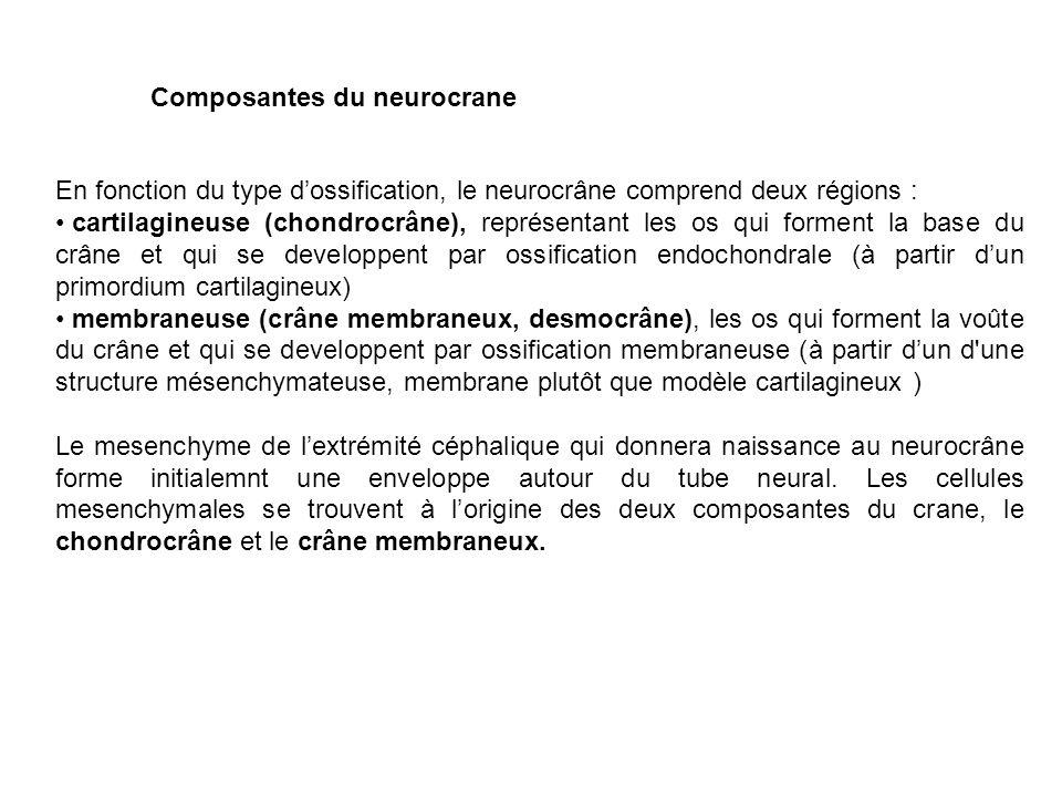 Composantes du neurocrane