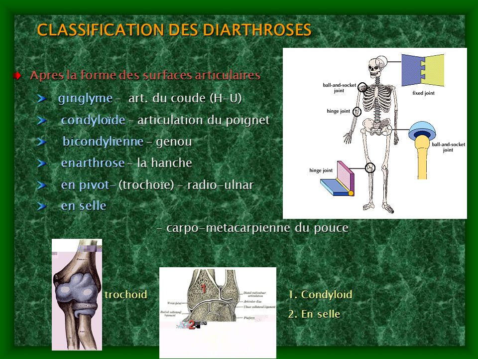 CLASSIFICATION DES DIARTHROSES