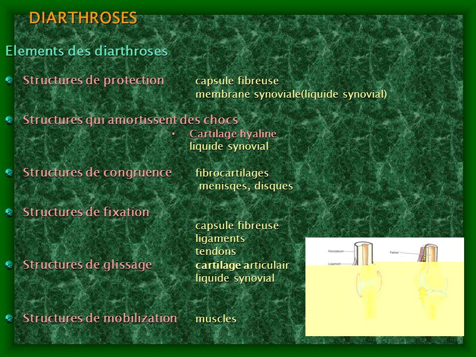DIARTHROSES Elements des diarthroses
