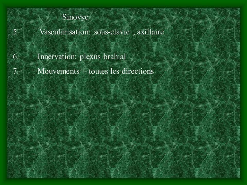Sinovye 5. Vascularisation: sous-clavie , axillaire.