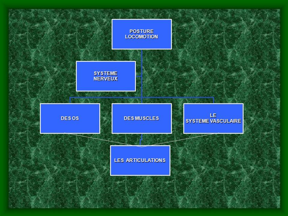 LOCOMOTION POSTURE NERVEUX SYSTEME DES OS DES MUSCLES LES ARTICULATIONS SYSTEME VASCULAIRE LE