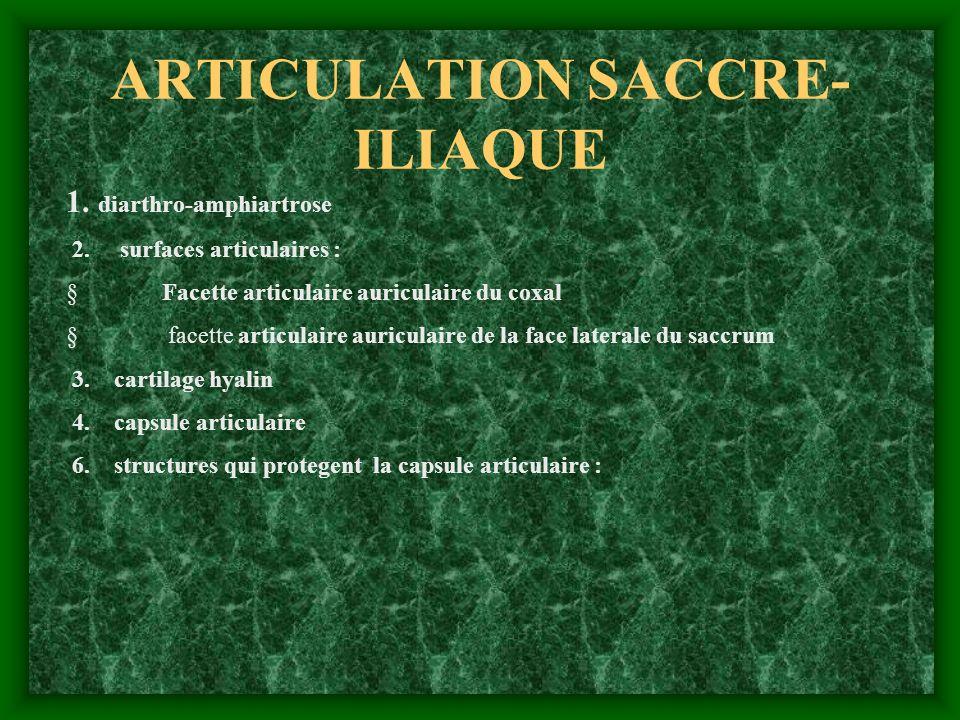 ARTICULATION SACCRE-ILIAQUE