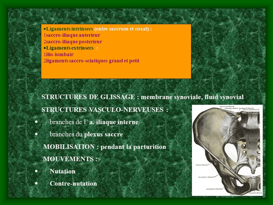 STRUCTURES DE GLISSAGE : membrane synoviale, fluid synovial