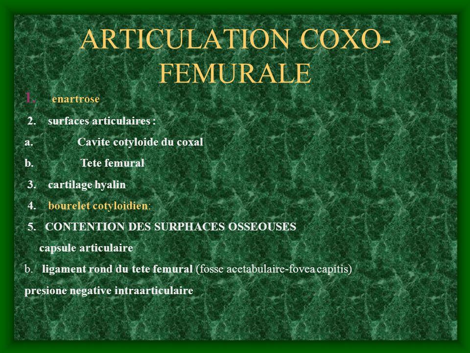 ARTICULATION COXO-FEMURALE