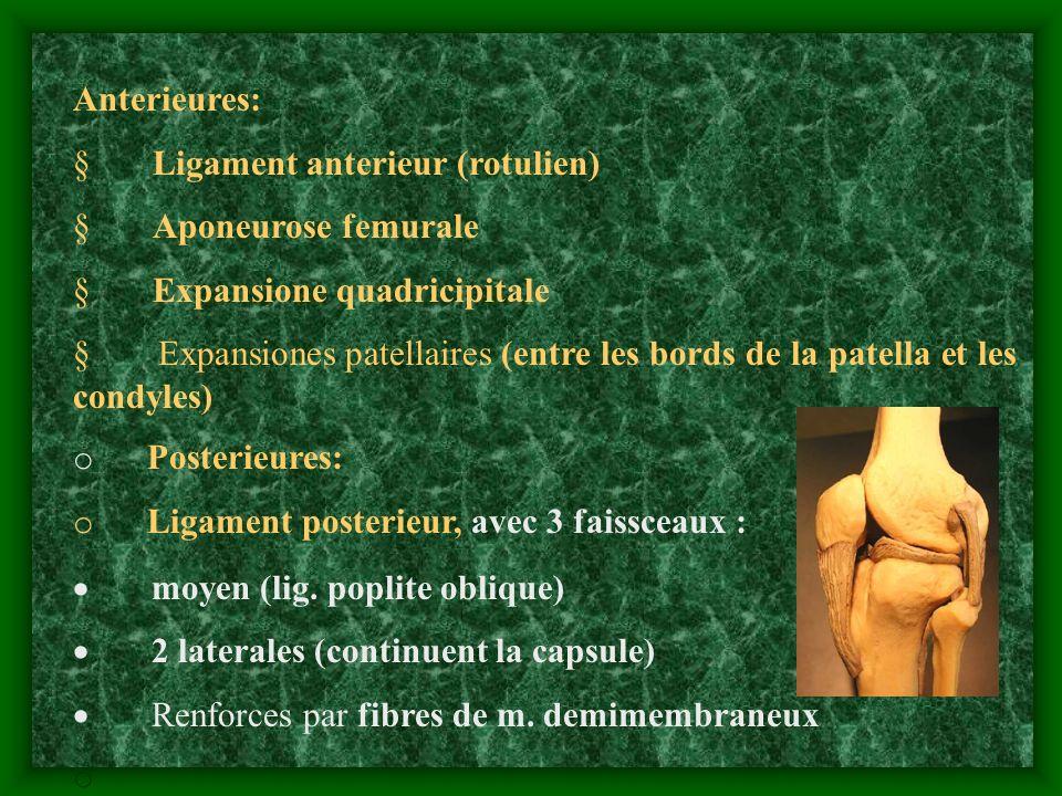 Anterieures: § Ligament anterieur (rotulien) § Aponeurose femurale. § Expansione quadricipitale.