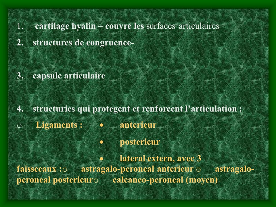 1. cartilage hyalin – couvre les surfaces articulaires