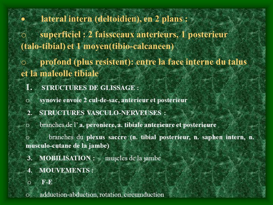· lateral intern (deltoidien), en 2 plans :