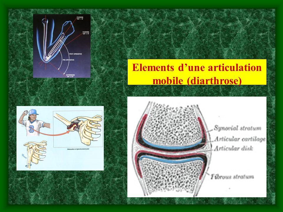 Elements d'une articulation mobile (diarthrose)