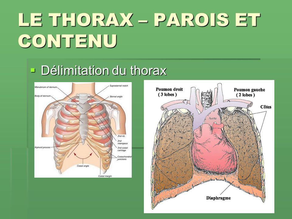 LE THORAX – PAROIS ET CONTENU