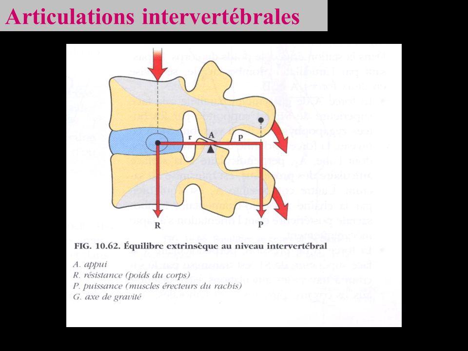 Articulations intervertébrales