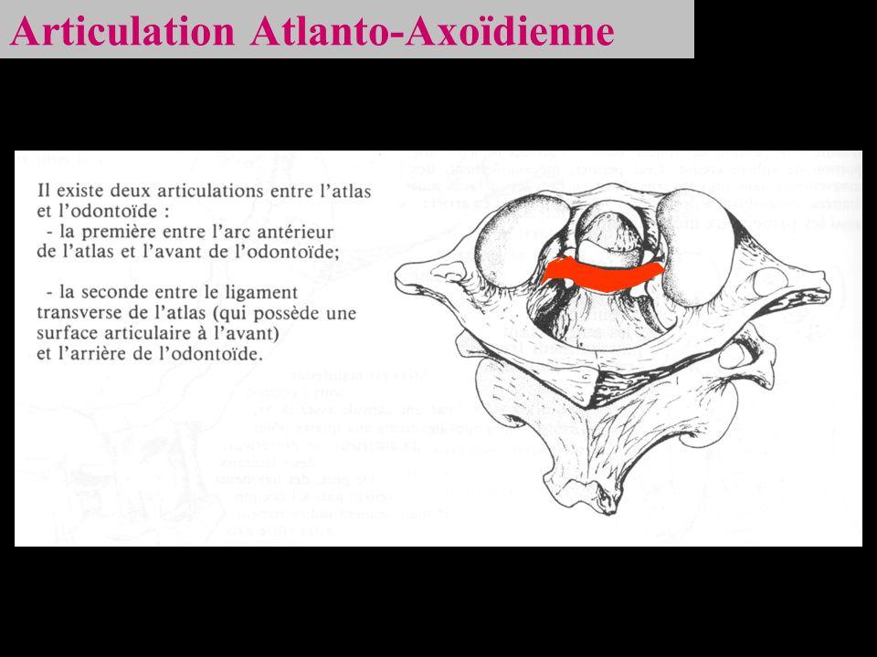 Articulation Atlanto-Axoïdienne