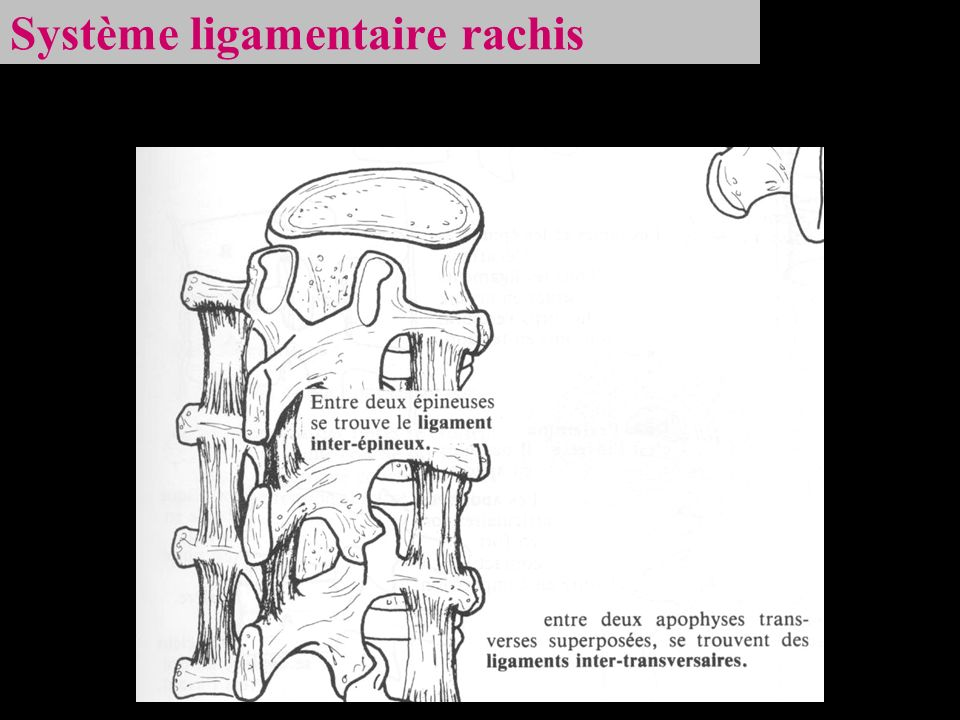 Système ligamentaire rachis