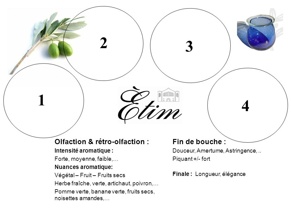 2 3 1 4 2 3 1 4 Olfaction & rétro-olfaction : Fin de bouche :