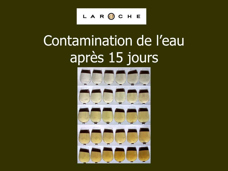 Contamination de l'eau après 15 jours