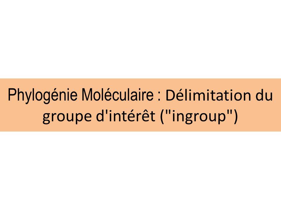 Phylogénie Moléculaire : Délimitation du groupe d intérêt ( ingroup )