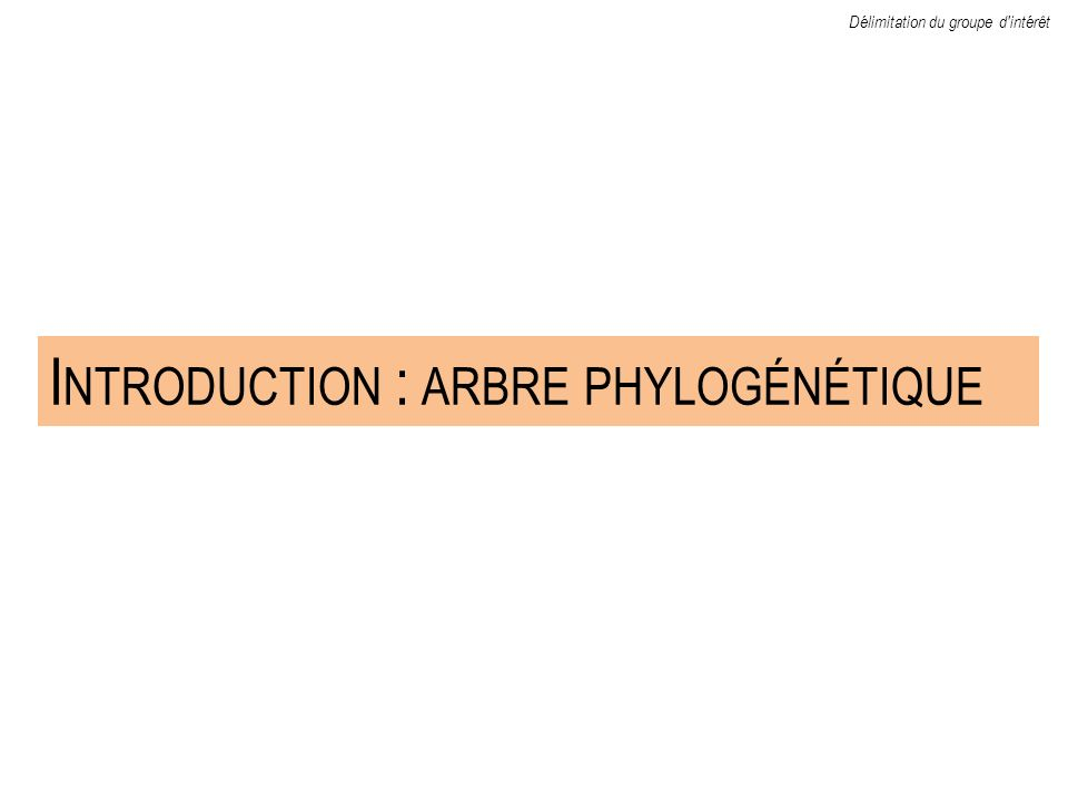 Introduction : arbre phylogénétique
