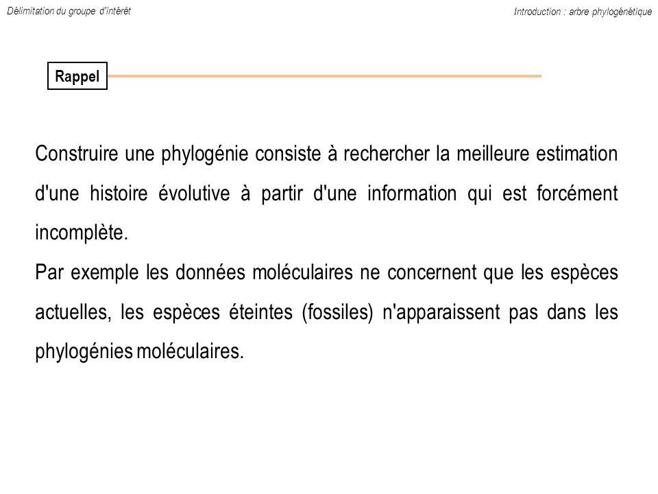 Introduction : arbre phylogénétique