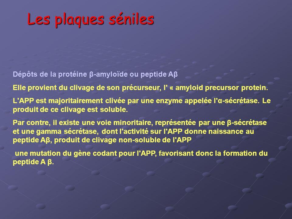Les plaques séniles Dépôts de la protéine β-amyloïde ou peptide Aβ