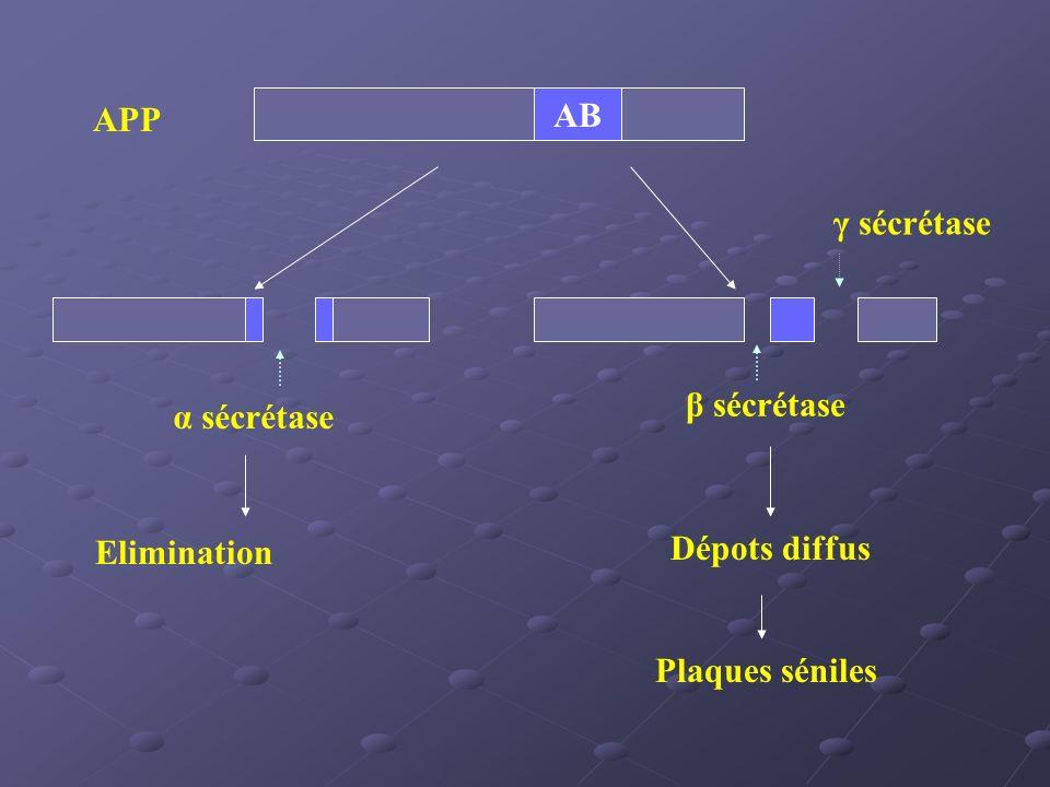 AB APP γ sécrétase α sécrétase β sécrétase Elimination Dépots diffus Plaques séniles