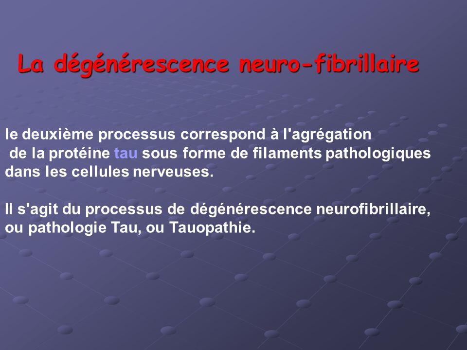La dégénérescence neuro-fibrillaire