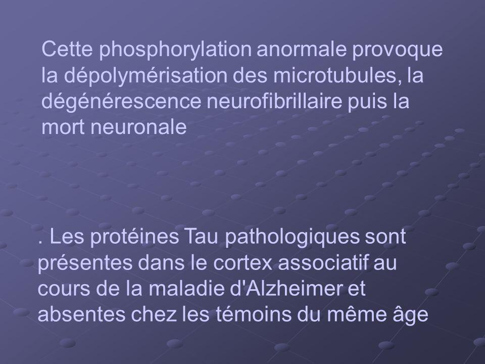 Cette phosphorylation anormale provoque la dépolymérisation des microtubules, la dégénérescence neurofibrillaire puis la mort neuronale