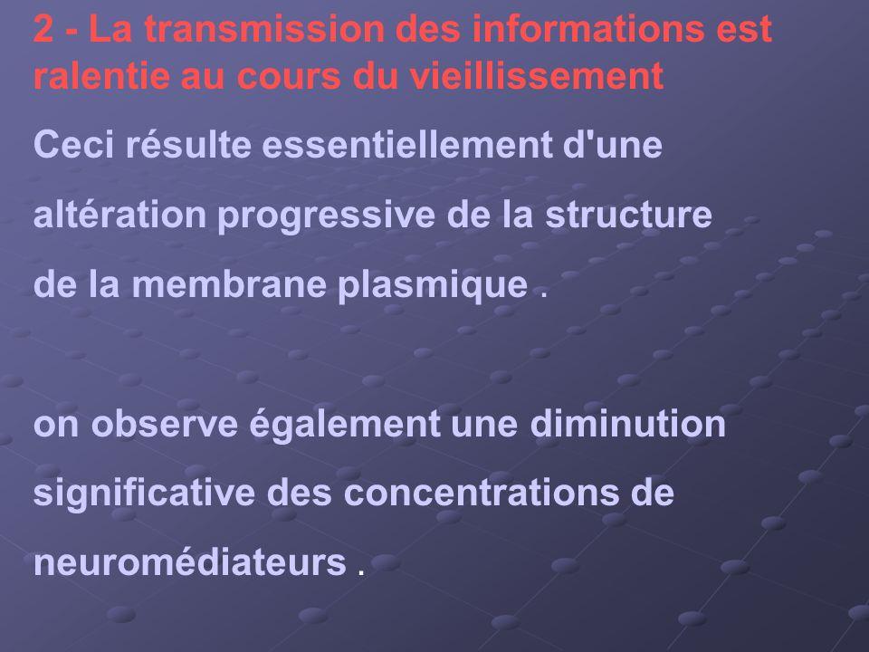 2 - La transmission des informations est ralentie au cours du vieillissement