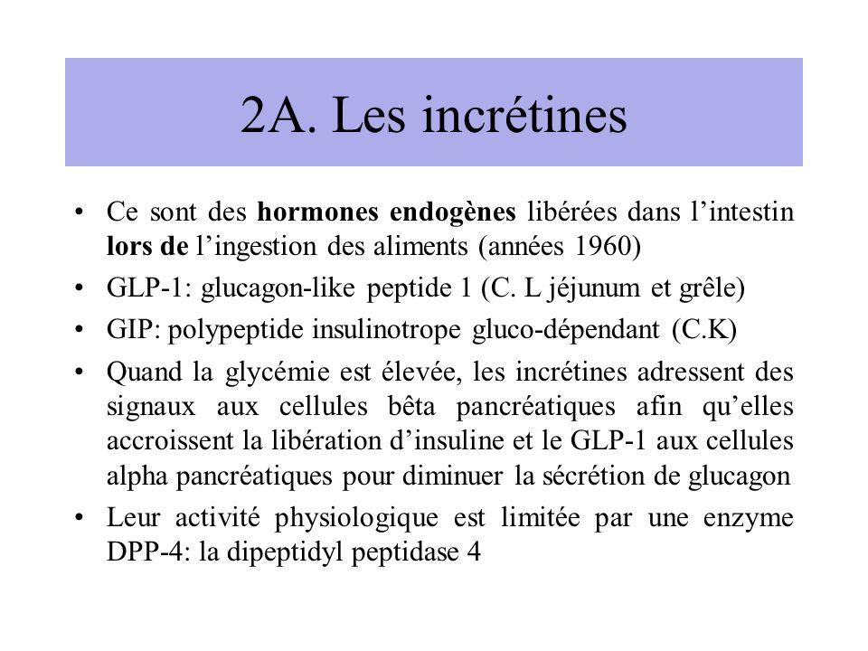 2A. Les incrétines Ce sont des hormones endogènes libérées dans l'intestin lors de l'ingestion des aliments (années 1960)