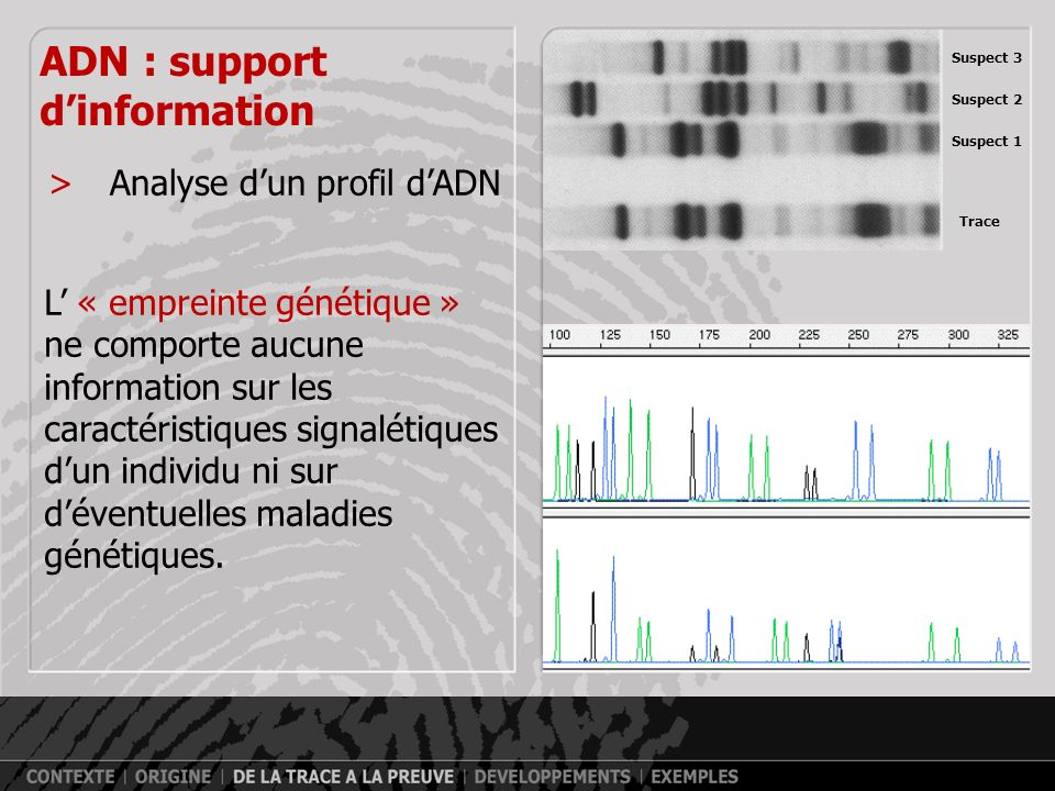 ADN : support d'information