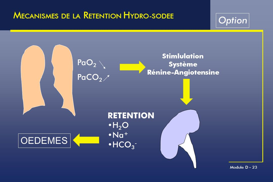 MECANISMES DE LA RETENTION HYDRO-SODEE Option