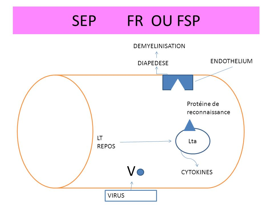 SEP FR OU FSP V DEMYELINISATION ENDOTHELIUM DIAPEDESE