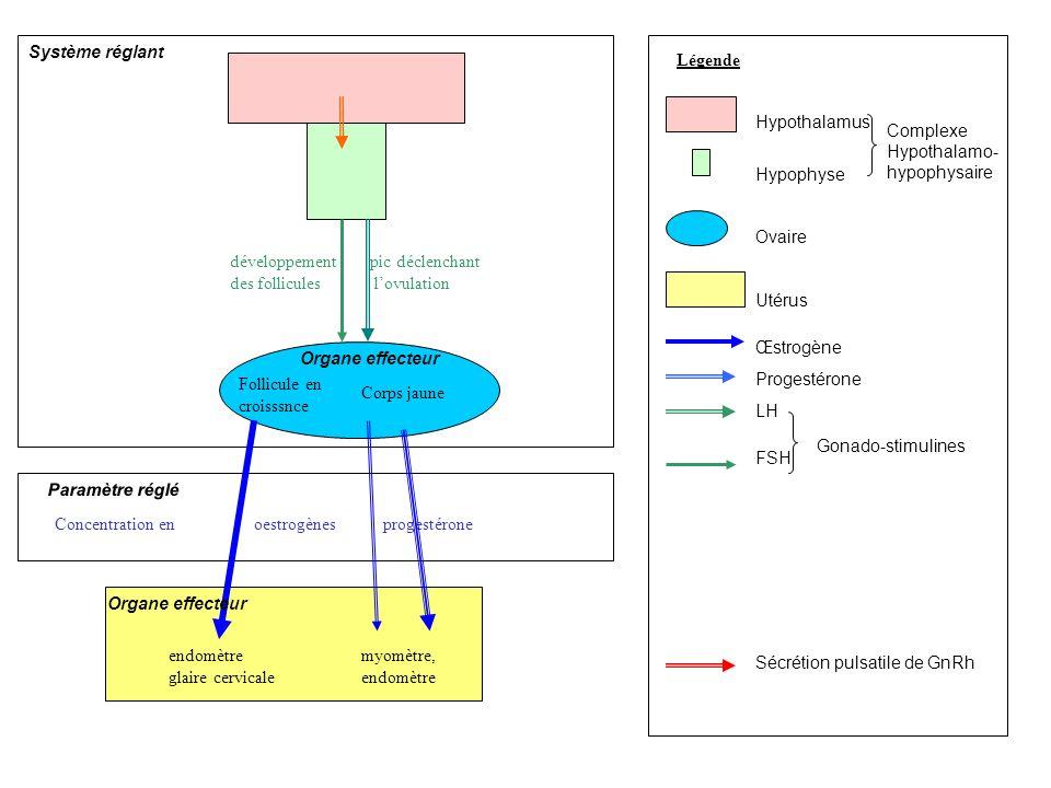 Système réglant Légende. Hypothalamus. Hypophyse. Ovaire. Utérus. Œstrogène. Progestérone. LH.