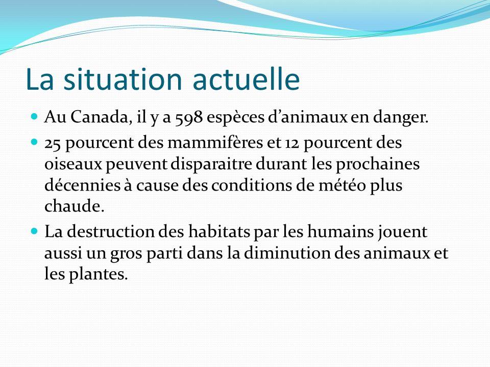 La situation actuelle Au Canada, il y a 598 espèces d'animaux en danger.