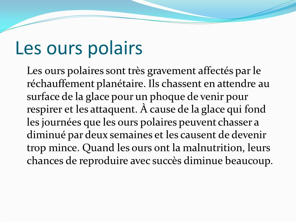 Les ours polairs