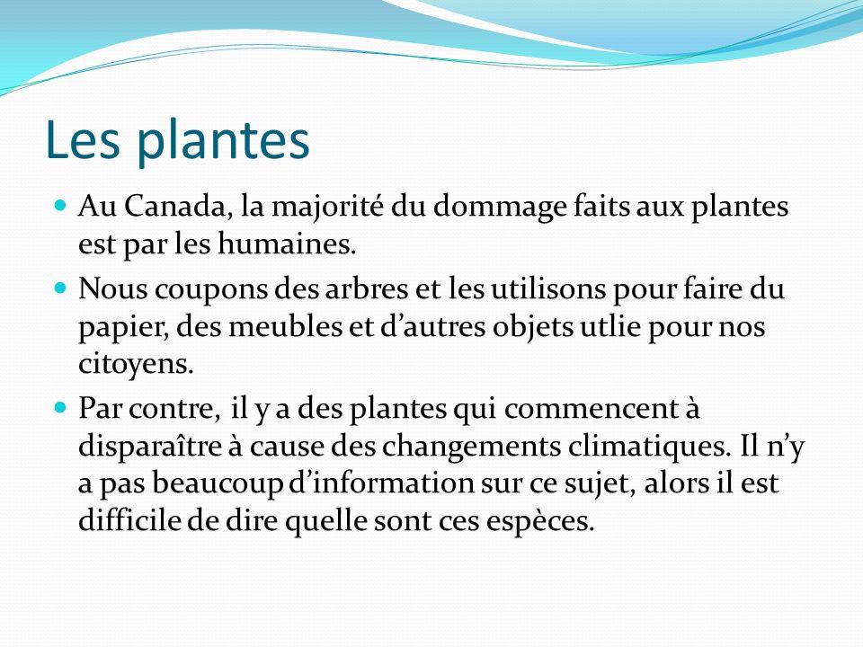 Les plantes Au Canada, la majorité du dommage faits aux plantes est par les humaines.