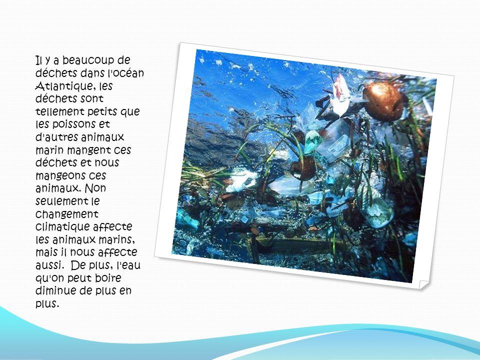 Il y a beaucoup de déchets dans l océan Atlantique, les déchets sont tellement petits que les poissons et d autres animaux marin mangent ces déchets et nous mangeons ces animaux.